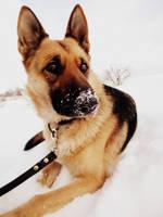 Brenda in winter by mistty002