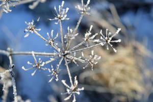 Winter by mistty002