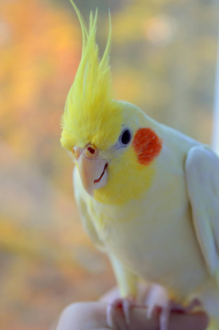 Bird time by mistty002
