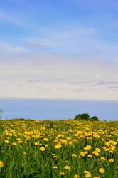 Springtime by mistty002