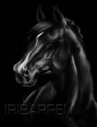 Black Stallion by Sombreday31