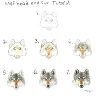 Wolf head and fur tutorial by autumnjaguar