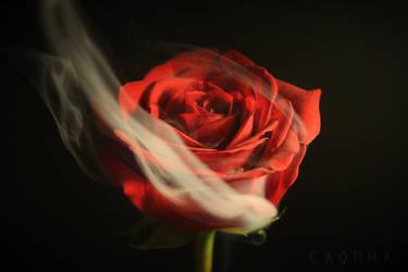 Rose by Caomha