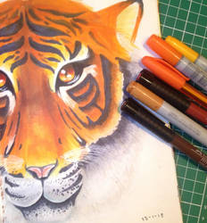 Tiger by Fat--Cow