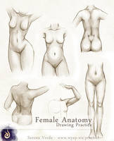 Female Anatomy Drawing Practice by SerenaVerdeArt