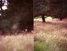 magenta meadow by passingbird