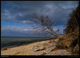The shore tree by Zair-Ugru-nad