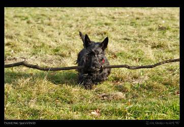 Hunting succeded by Zair-Ugru-nad