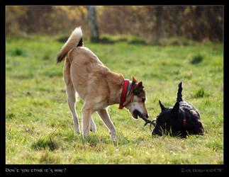 Don't you think it's mine? by Zair-Ugru-nad