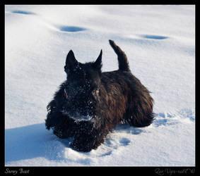 Snowy Beast by Zair-Ugru-nad