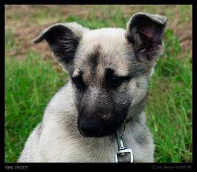 Just puppy by Zair-Ugru-nad