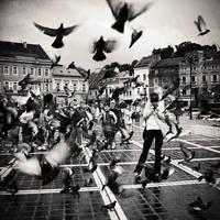 The Birds by DarkCrissus