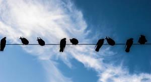 Pigeons by hispanhun