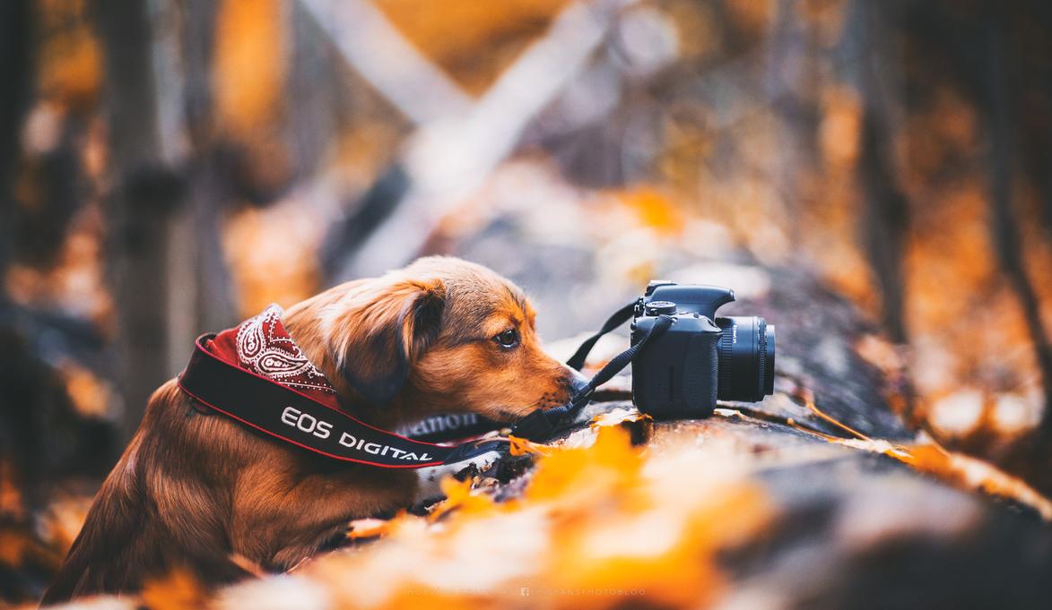 nature photographer by hispanhun