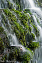 Rock Island Moss by theon07