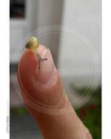 Little snail by dexter13-sk
