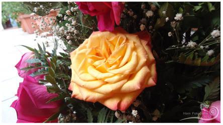 Una Bella Flor by Kosukeham