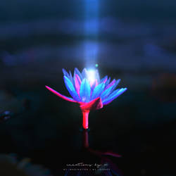 Glowing Lilly by vmaharaj
