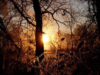 Winter gold by unzhakova
