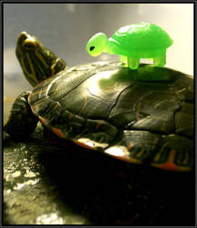Turtle on my back by DimmedFaith
