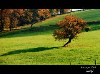 Autumn tree by niwaj