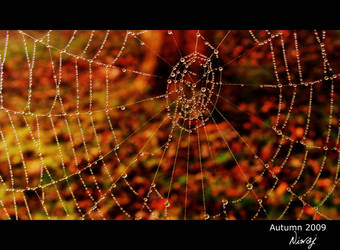 Spider web by niwaj