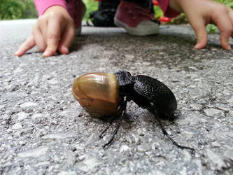 Bug Vs Snail by niwaj