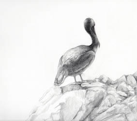 Pelican by PaperSpiders