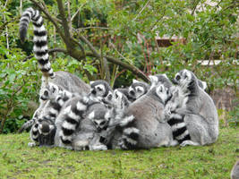 Stock image 17 : family hug by Vertasual