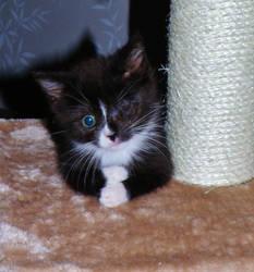 Only One Eye Kitty by Tiiuliina