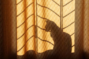 Cat in the window by aniaw