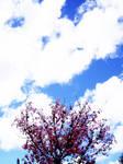 Cherry sky by AlyStare
