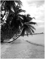 More Palm Tree's by monkeyman1988