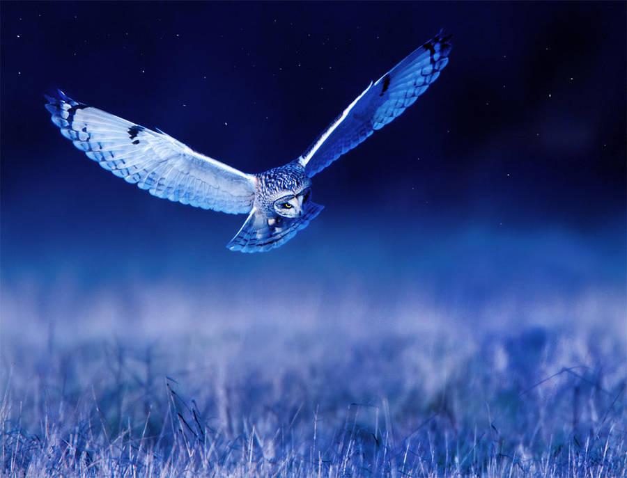 Night Stalker by Jamie-MacArthur