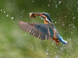 A splash of blue by Jamie-MacArthur