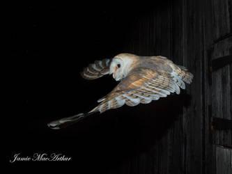 Barn Owl by Jamie-MacArthur