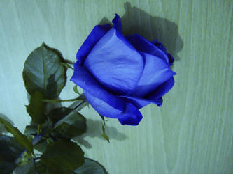 Blue Rose by SaimGraphics