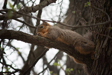Squirrel by TowiWakka