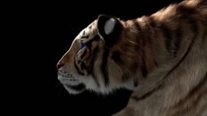 Tiger by armieri