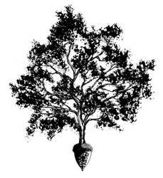 Oak and Acorn by BryanLedford-Ink