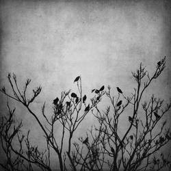 Birds by invisigoth88