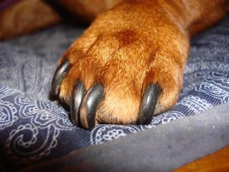 The Best Foot Model by fuzzypurplequill