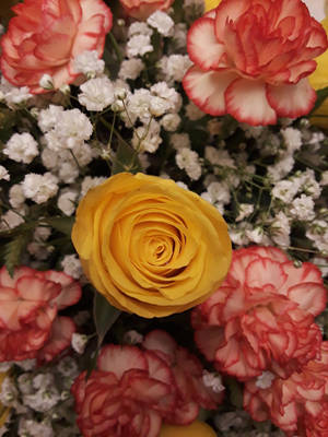 Yellow Rose by HaveFaithHopeLoveArt