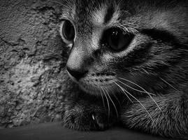 de ce se uita la mine? by SeulesurleSable