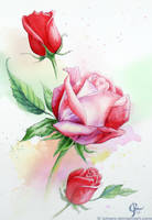 Three roses by Juhani