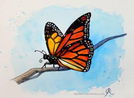 Butterfly by Juhani