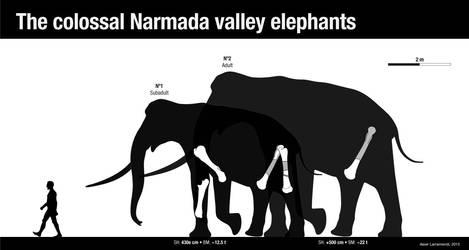 The colossal Narmada valley elephants by Asier-Larramendi