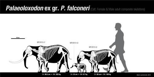 The tiny Spinagallo Cave elephants by Asier-Larramendi