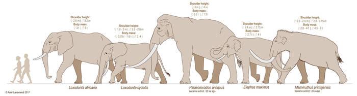 Elephants - Elephantidae by Asier-Larramendi