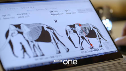 BBC One: Attenborough and the Giant Elephant FRAME by Asier-Larramendi